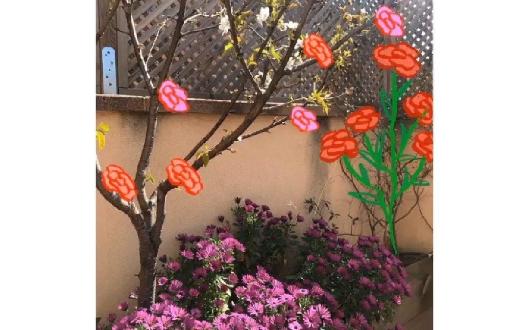 Al cirerer de MoMa li han sortit roses!!! 🐉🌹FELIÇ SANT JORDI 🌹🐉